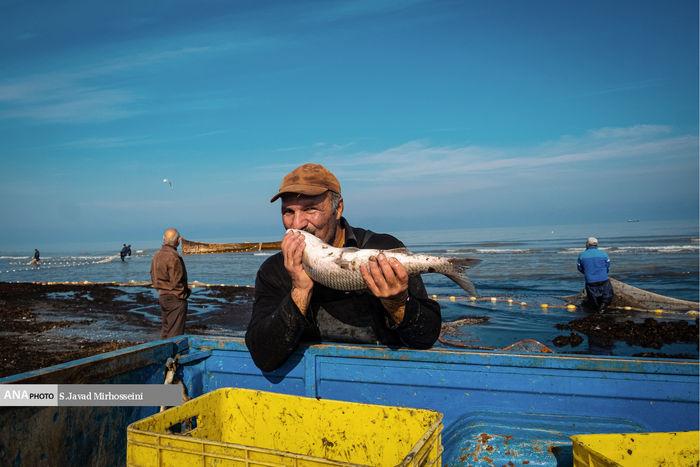 تصاویر/ صید پره قدیمیترین روش صید ماهیان خزری