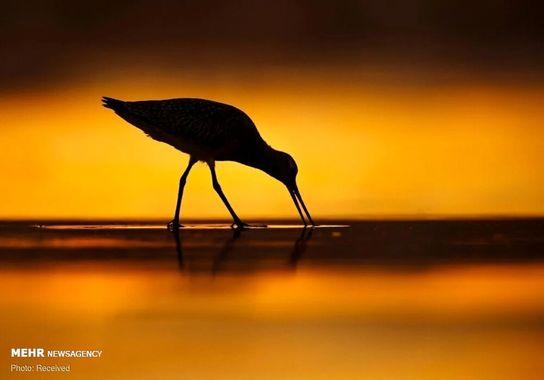 عکاسی-پرنده (10)