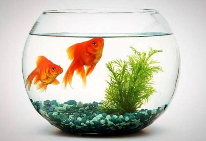 ماهی قرمز شب عید ناقل کروناست؟