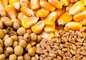 قیمت روز نهاده های دامی و کشاورزی در بازار (۱۴۰۰/۰۲/۰۸) + جدول