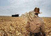 قیمت گندم اصلاح می شود