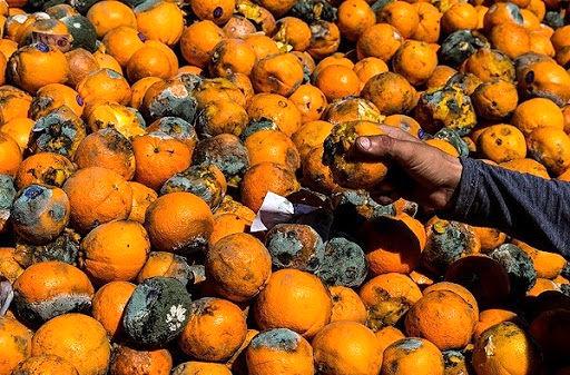 نابودی میوه های بازار و سود هنگفت دلالان