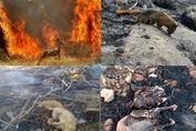 کدام گونههای جانوری در آتش خاییز سوختند؟