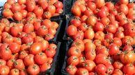 بازار جدیدی که گوجه فرنگی را ارزان کرد