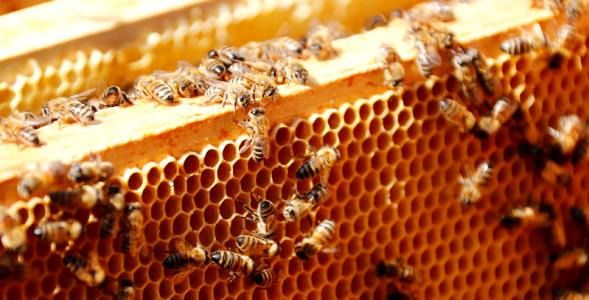 جدیدترین قیمت انواع عسل در بازار+ جدول