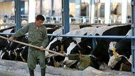 افزایش شدید قیمت خوراک دام در بازارهای جهانی