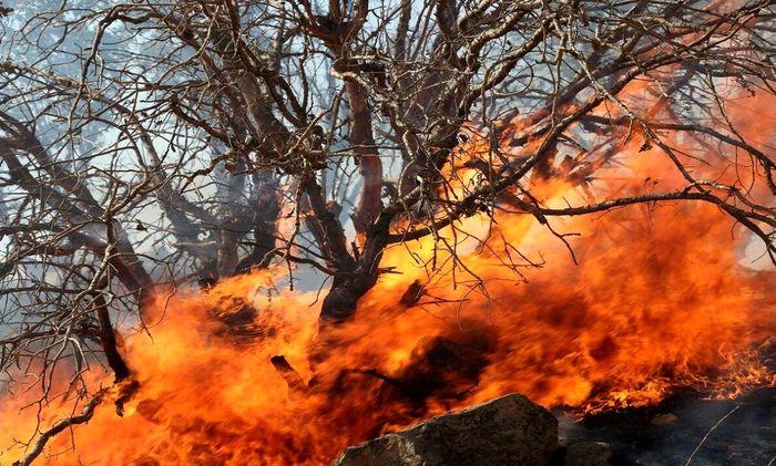 عوامل بروز آتش سوزی در جنگل ها چیست؟ / زاگرس بیشتر از هیرکانی می سوزد