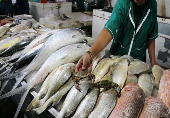 قیمت ماهی در بازار امروز (۹۹/۱۲/۰۵) + جدول