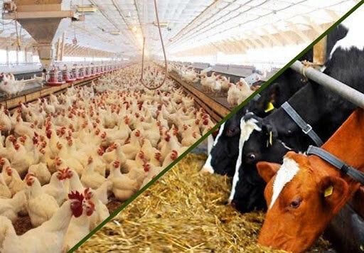 قیمت نهاده های دامی و کشاورزی در بازار (۹۹/۱۲/۲۶)
