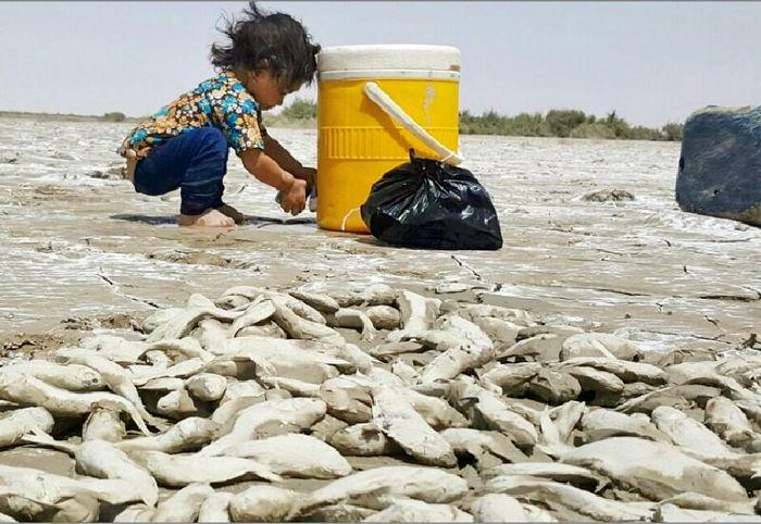 فجایع زیست محیطی در تالاب هورالعظیم