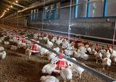 بازار تخم مرغ سر و سامان می گیرد