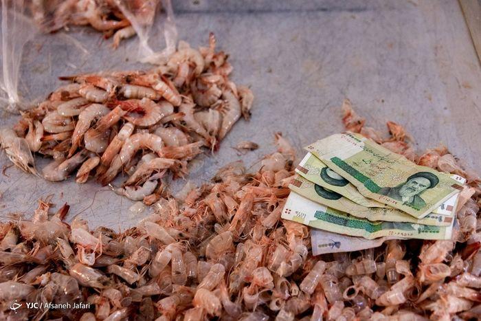 تصاویر/ بازار داغ میگو در مرداد ماه بوشهر