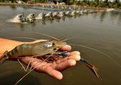 تخفیف ویژه سازمان شیلات برای عرضه ماهی
