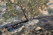 احتمال بازگشت آتش به منطقه حفاظت شده خائیز