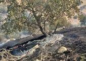 آتش بر دامان جنگلها؛ دیروز گچساران و امروز کهگیلویه/فیلم