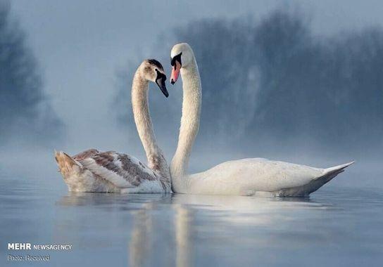 عکاسی-پرنده (11)