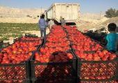 قیمت روز نهاده های دامی و محصولات کشاورزی در بازار