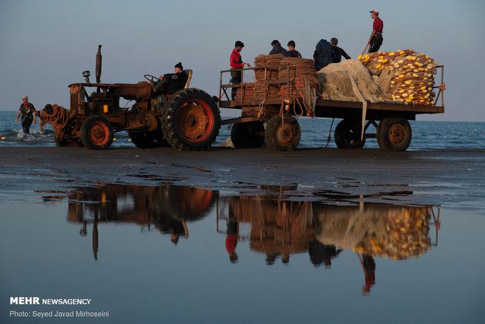 تصاویر/ آغاز صید ماهی در بندانزلی