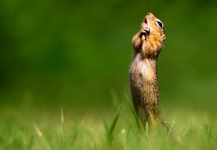 تصاویر / برگزیدگان مسابقه عکاسی کمدی حیات وحش