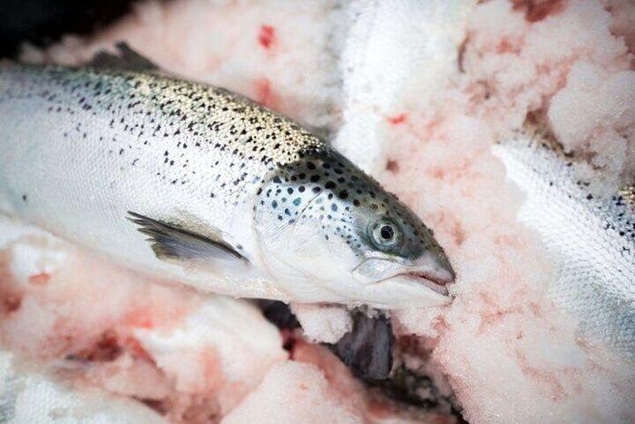 قیمت ماهی در بازار امروز + جدول (۱۰ مرداد)