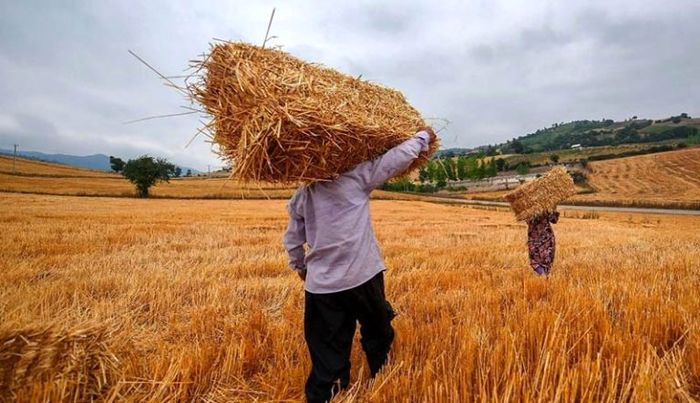 راه حل اجباری کشاورزان برای گرانی کود