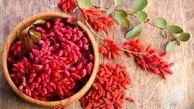 خواص اعجاز انگیز این گیاه قرمز برای سلامت بدن