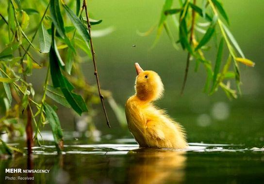 عکاسی-پرنده (5)