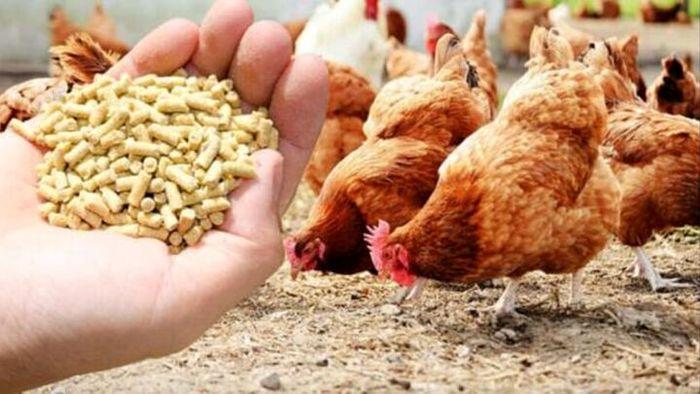 قیمت نهاده های دامی و کشاورزی در بازار (۹۹/۱۲/۲۵)