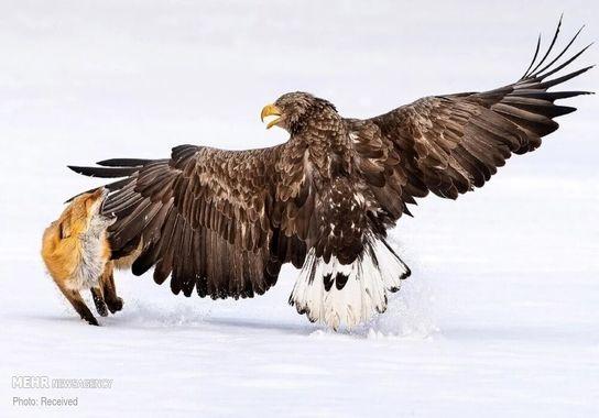عکاسی-پرنده (8)