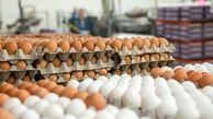 سایه سنگین ندانمکاری بر سر بازار تخممرغ