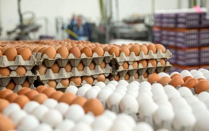 کاهش قیمت تخم مرغ در میادین میوه و تره بار + جزییات