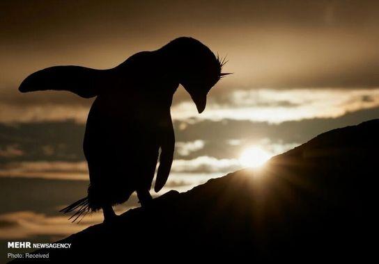 عکاسی-پرنده (2)