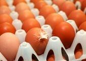 برای خرید تخم مرغ ارزان به تهرانپارس بروید!