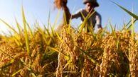 حق با تولیدکنندگان  سموم است یا واردکنندگان؟