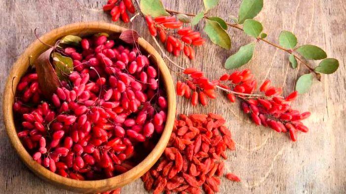 خواص شگفت انگیز این گیاه قرمز برای بدن