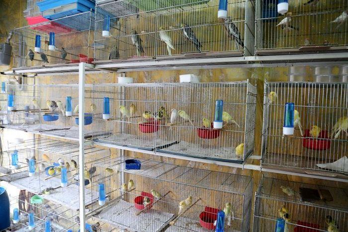 راهنمای پرورش پرنده تزئینی با ۵ میلیون تومان