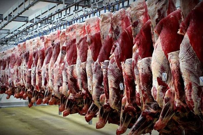 چرا گوشت قرمز گران شد؟