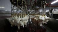 ماجرای مرغ تریاکی در اصفهان چه بود؟