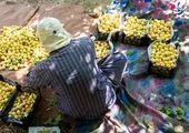از دست زدن و سوا کردن میوه ها خودداری کنید!