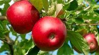 سیب و پرتقال میوه ممنوعه شدند!