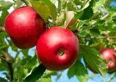 توزیع سیب و پرتقال شب عید به قیمت مصوب/ فیلم