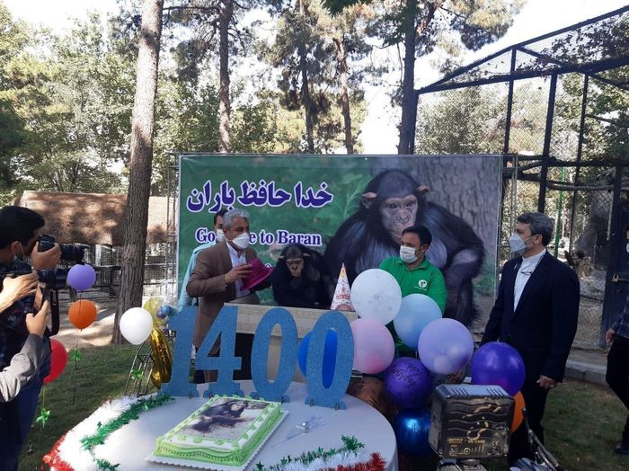 معروفترین شامپانزه ایران از کشور رفت!