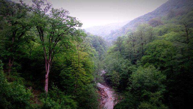همه چیز درباره جنگلهای هیرکانی / هشدار درباره خارج شدن از ثبت جهانی